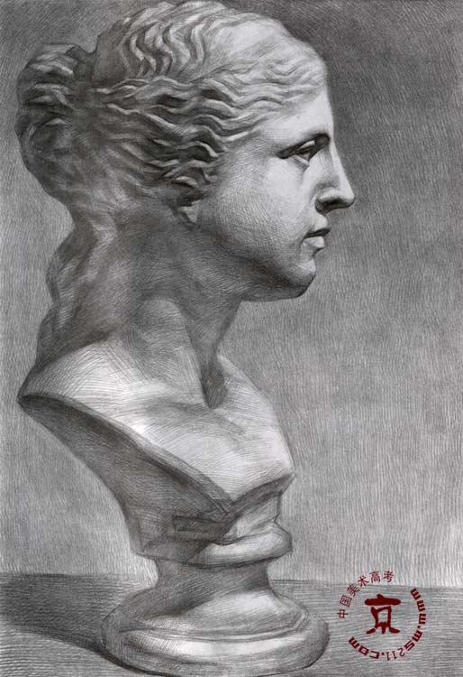 石膏头像写生维纳斯展示