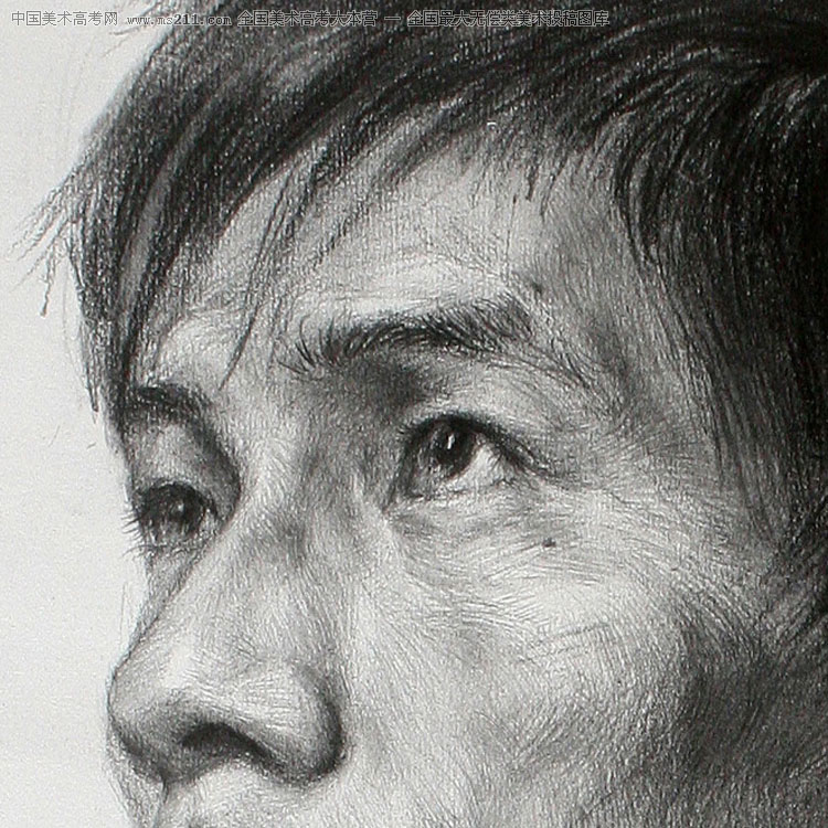 彼岸花素描图片 铅笔画展示