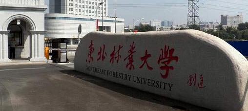 2013年东北林业大学艺术类美术高考招生简章